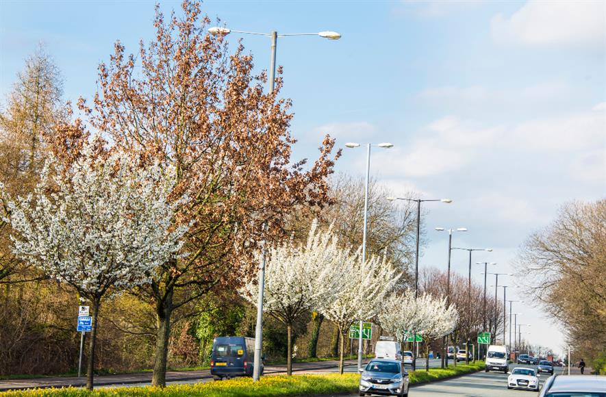 The Urban Tree Challenge Fund has helped plant more than 130,000 trees across England - credit: Forestry Commission