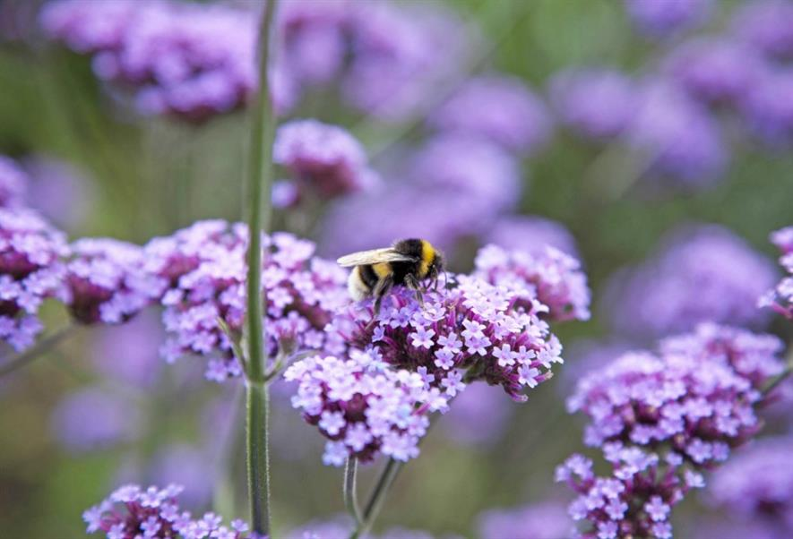 Cuckoo bumble bee, shot in London. Picture: Amelia Collins