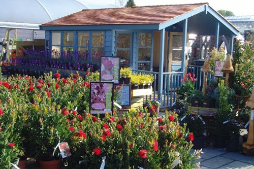 Best Planteria - Coolings Nurseries - A Plant Lovers' Paradise - image: HW