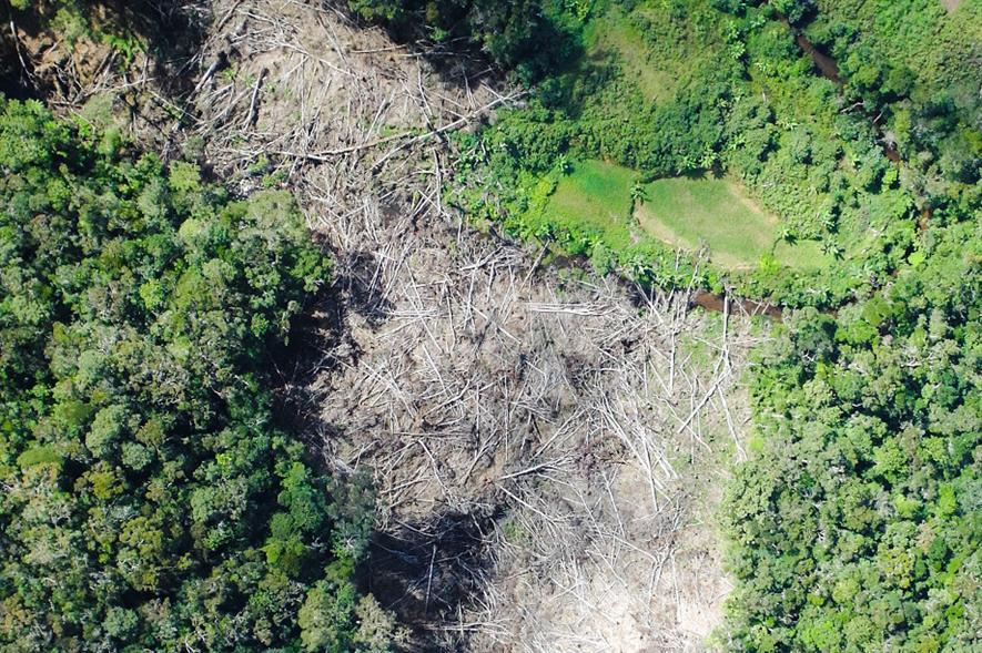 Deforestation in Madagascar - credit: RBG Kew