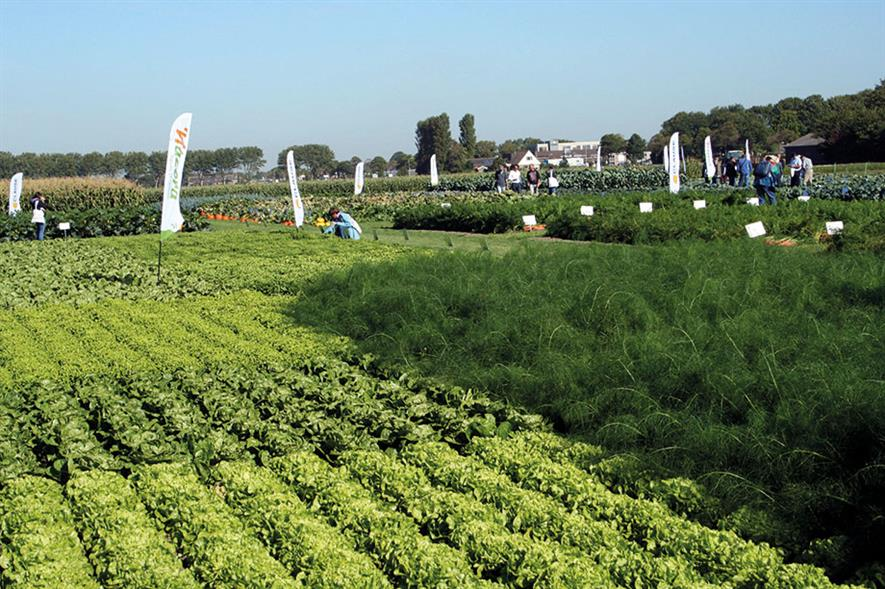Dutch field vegetable open days: this year's event hosted in the province of North Holland attracted visitors from around 50 countries ranging from Albania to Zimbabwe - image: HW