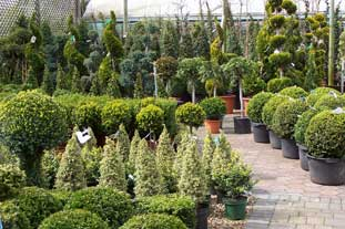 Hardy nursery stock at Wyevale Nurseries - photo: HW