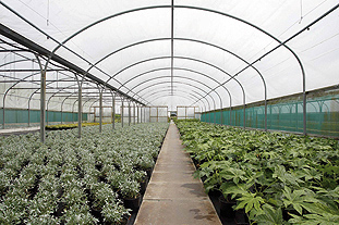 Smart films: enable active management of ambient light and temperature in polytunnels  Image; BPI.VISQUEEN