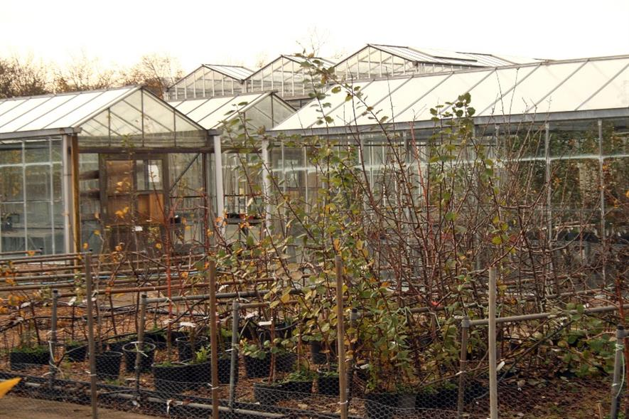 Trees for planting at East Malling Research - image:HW