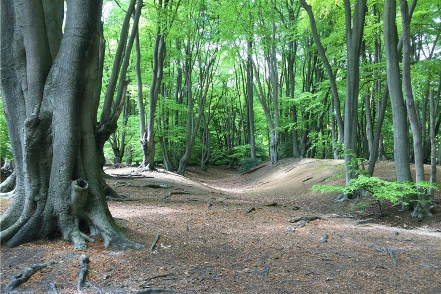 Epping Forest. Image: Matt Brown/Flickr