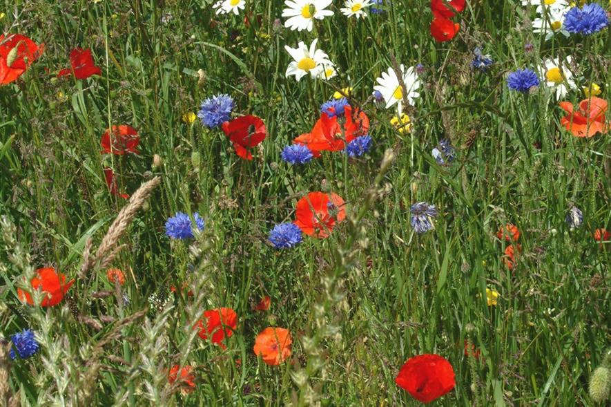 Germinal Amenity says its new native meadow mix is quick to establish. Image: Germinal Amenity