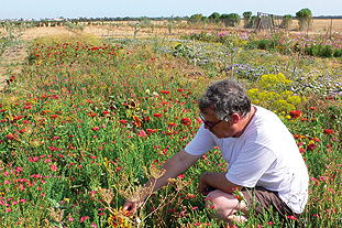 Testing the limits: consultant Wood trialling flower seed mixes under different conditions in Tunisia - image: Howard Wood