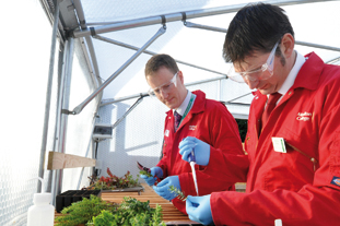 Moulton College believes horticultural research is a viable direction for the college to take - image: Moulton College
