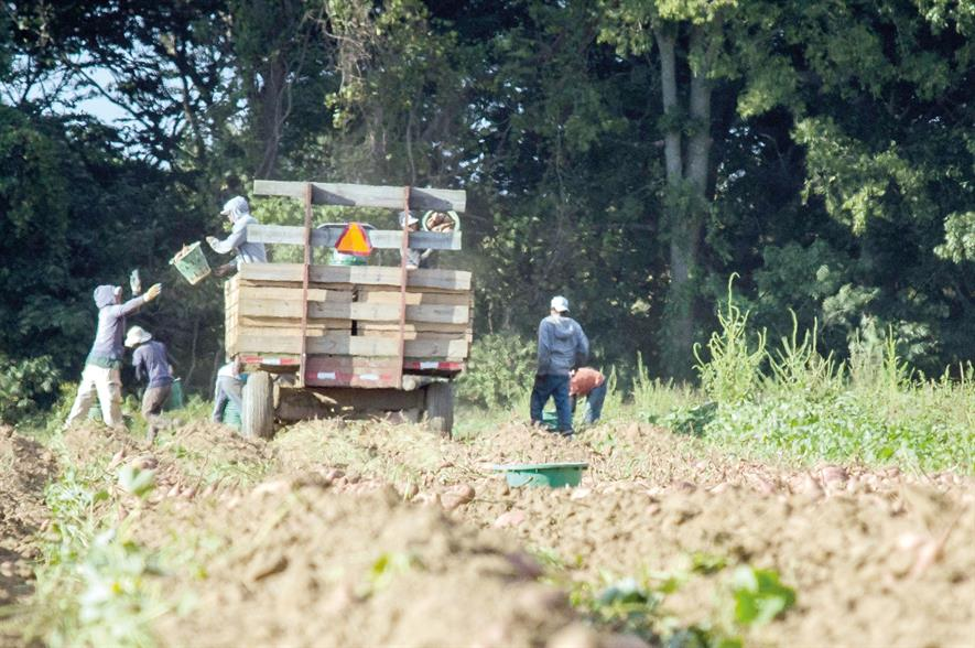 Farm workers: NFU says failure to manage transition from EU labour availability will have profound consequences