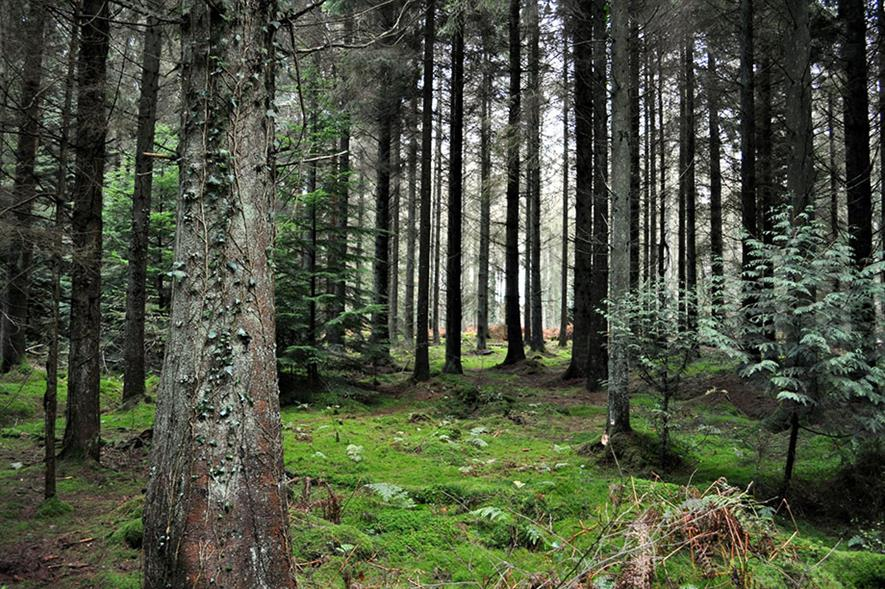 Forest of Dean - credit: Flickr/Afshin Taylor Darian (CC by 2.0)