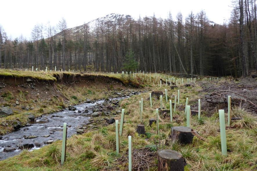 River South Esk catchment in Glen Doll Forest, Angus - credit: FLS