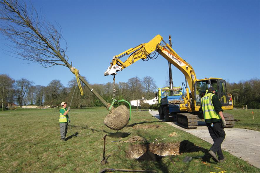 Trees: larger stock is becoming increasingly popular for a greater impact on new sites - image: Glendale Civic Trees