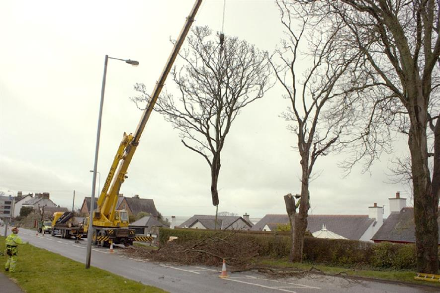 A tree is removed from the A847. Image: Glendale