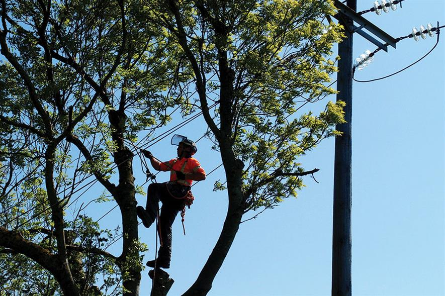 Ground Control: offers full range of arboricultural services from felling and maintenance to surveys and management plans - image: Ground Control