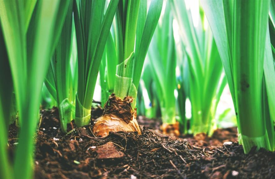 Grow-your-own onions are popular. Image: Crop Protection Association