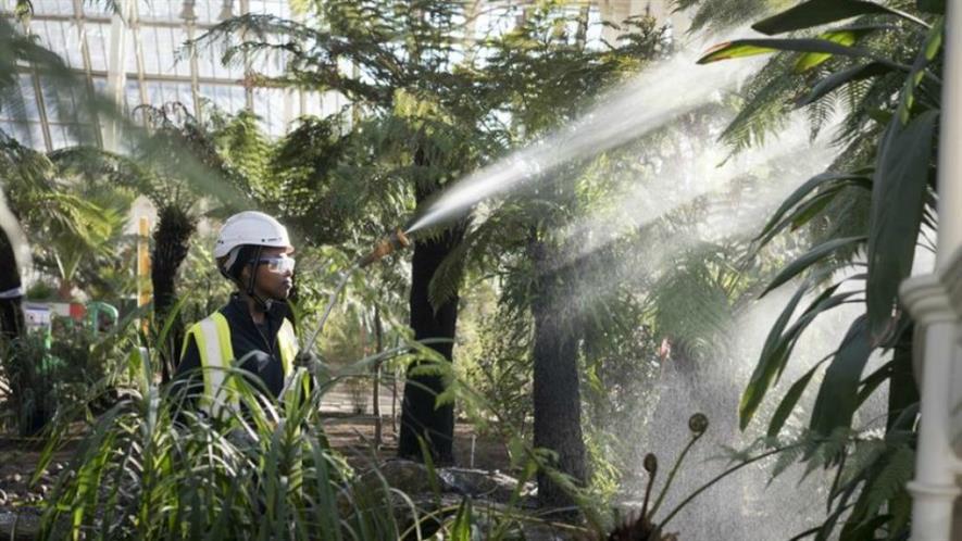 Horticultural apprentice Qamar Nur waters plants. Image: RBG Kew