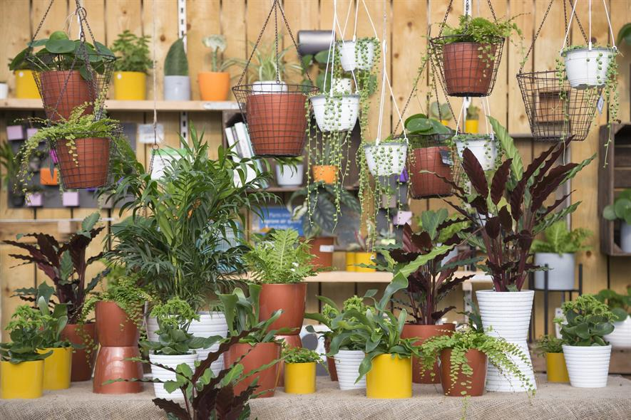 Houseplants at Perrywood GC