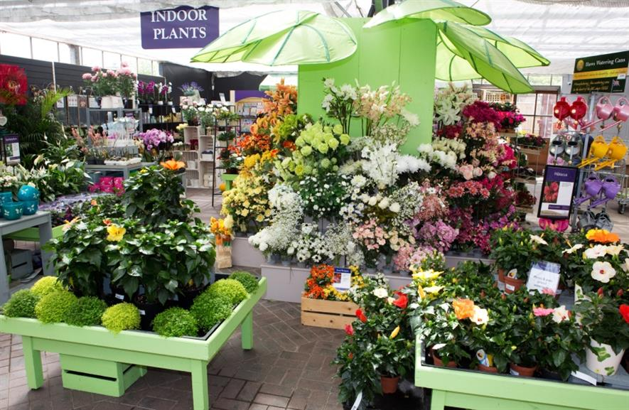 Houseplants were good sellers this January. Image: HW