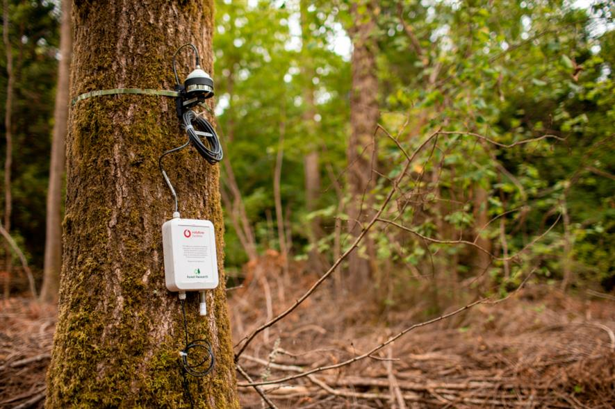 The IoT sensors from Vodafone have been fitted to trees across woodlands in Surrey and Northumberland - credit: Vodafone