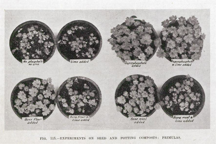 Eight composts: overall the best results were obtained when chalk and superphosphate were added together