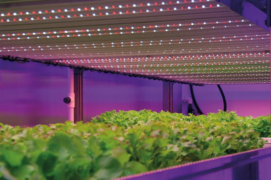 LEDs: indoor growing can minimise transport distance - image: HW