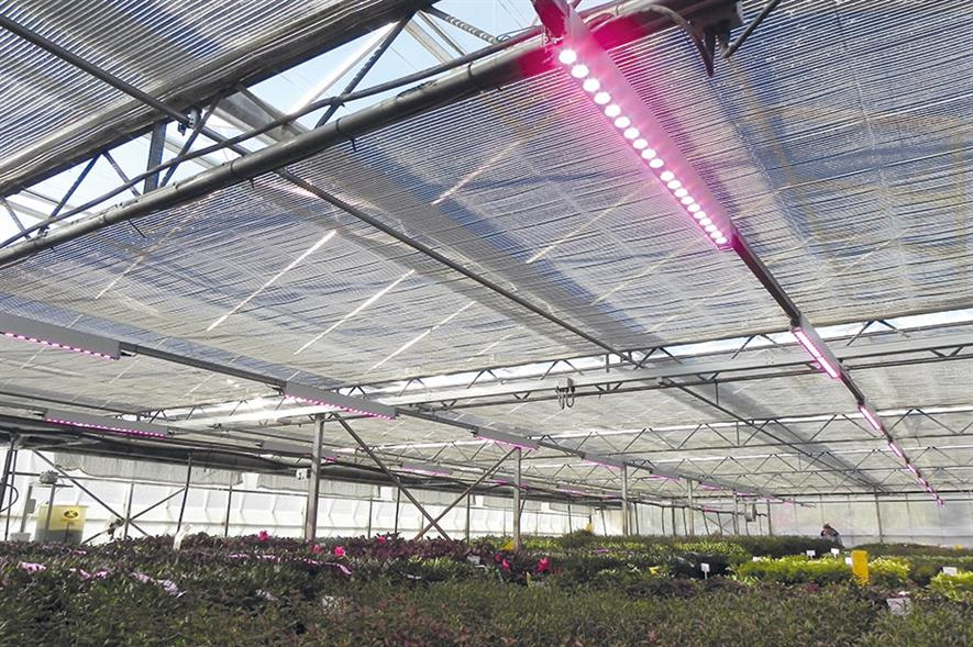 Kernock Park Plants: use of LEDs over mother stock and propagation beds has produced dramatic results for crop production - image: HW