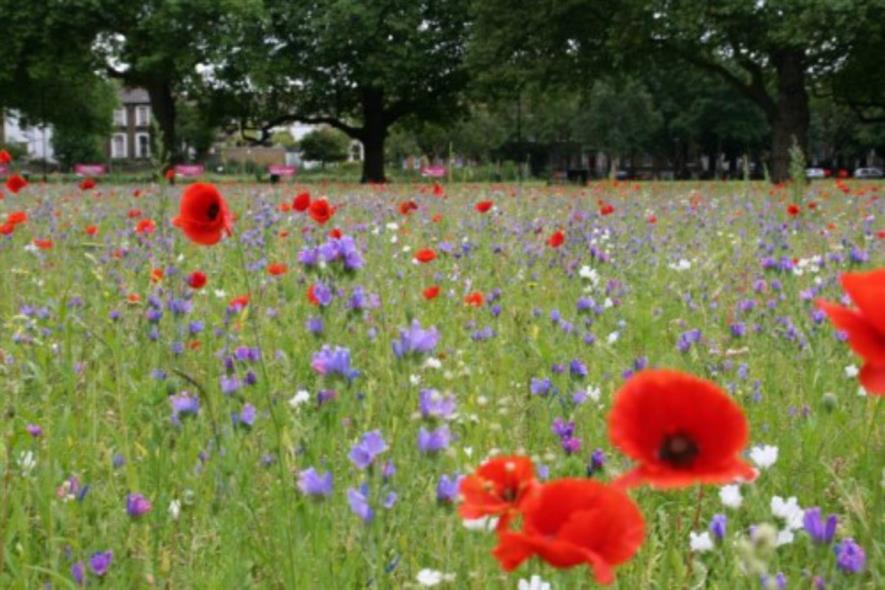 A wildflower meadow in London Fields. Image: Hackney Council