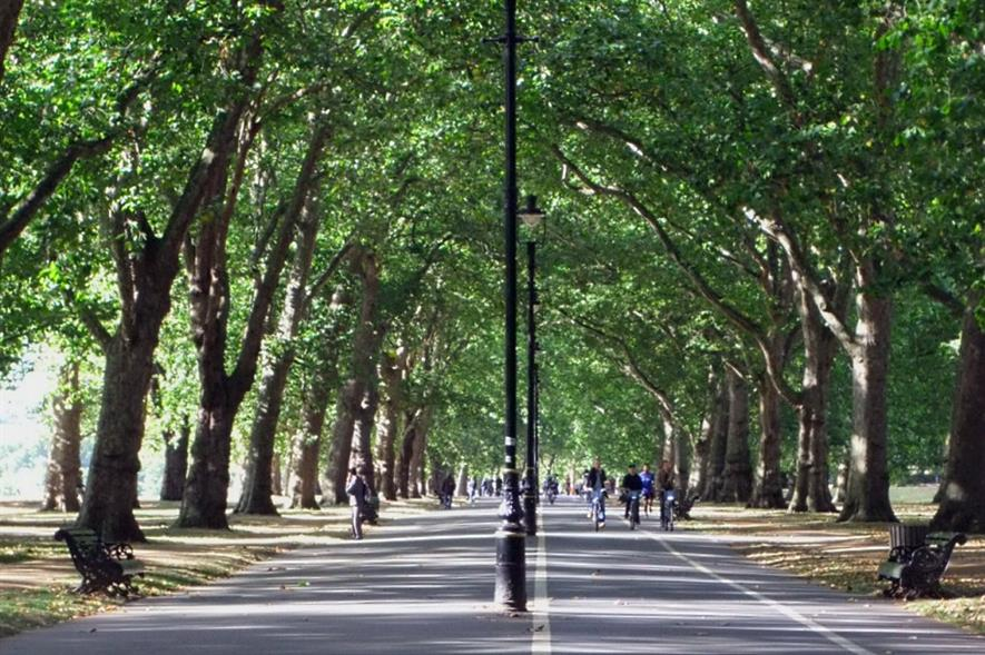 London plane trees in Hyde Park - image: Oatsy