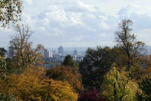 London trees - image:HW
