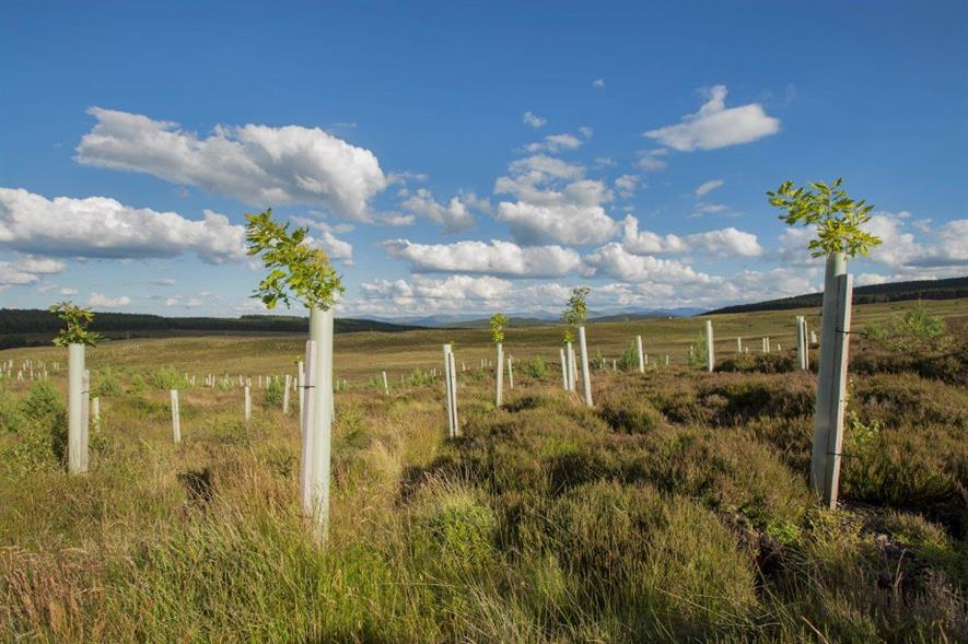 The Preparing Woodland Creation Applications guide is intended for small landowners - credit: Scottish Forestry