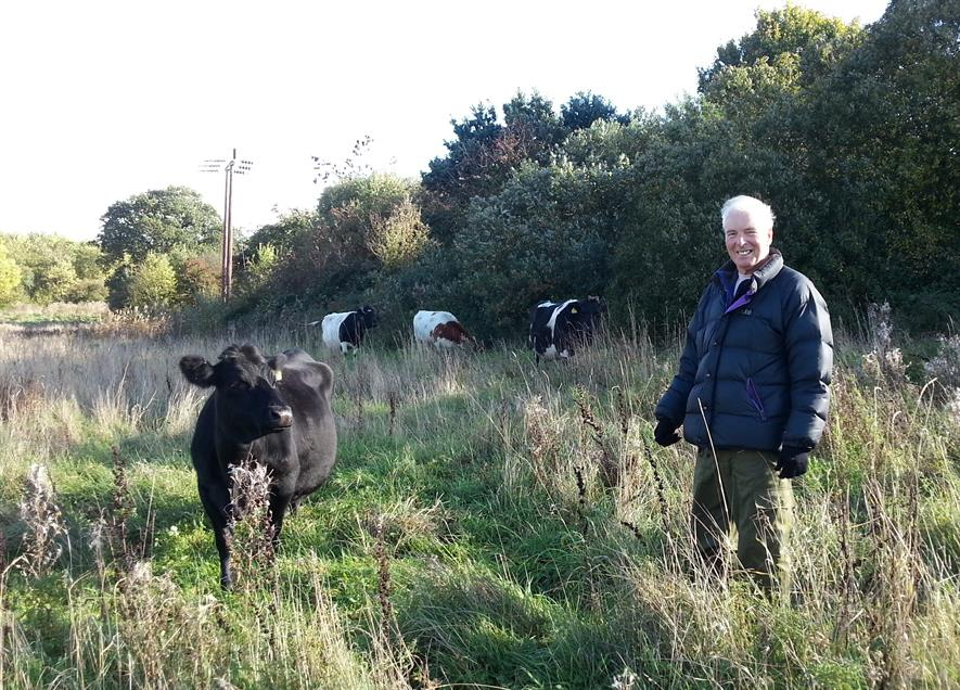 Volunteer cowherd Danny Flynn with Shetland cattle currently cutting grass on Canal and River Trust land