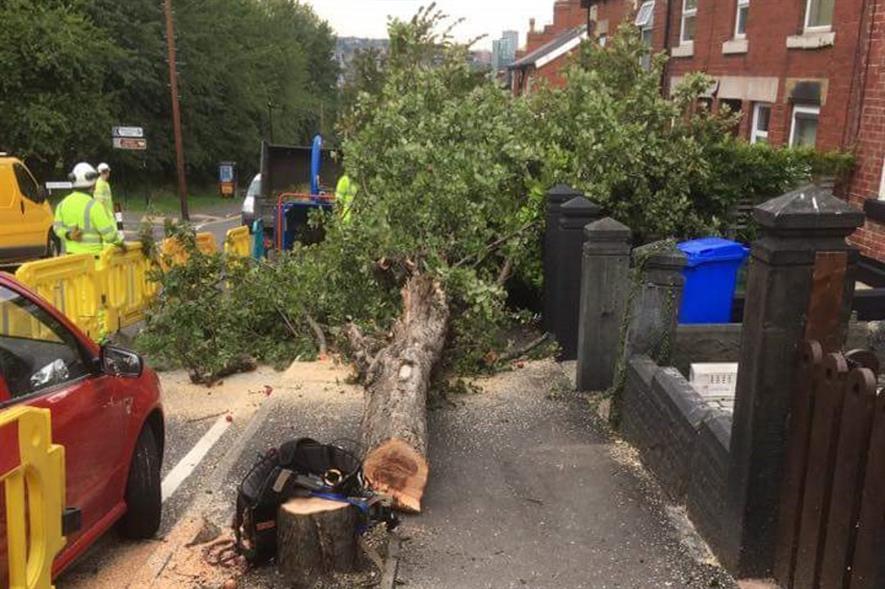 The tree felled on Myrtle Road - image: Simon Crump