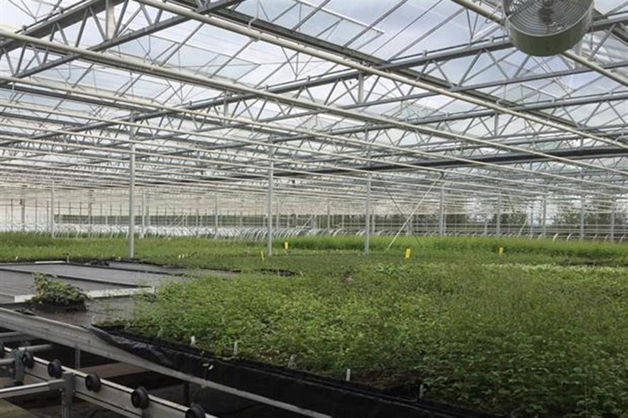 Image: New Leaf Plants