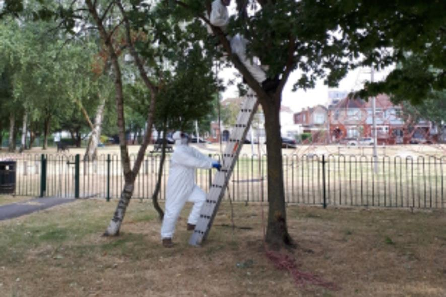 A GreenSpace 360 arboriculturist at work. Image: Hounslow Council