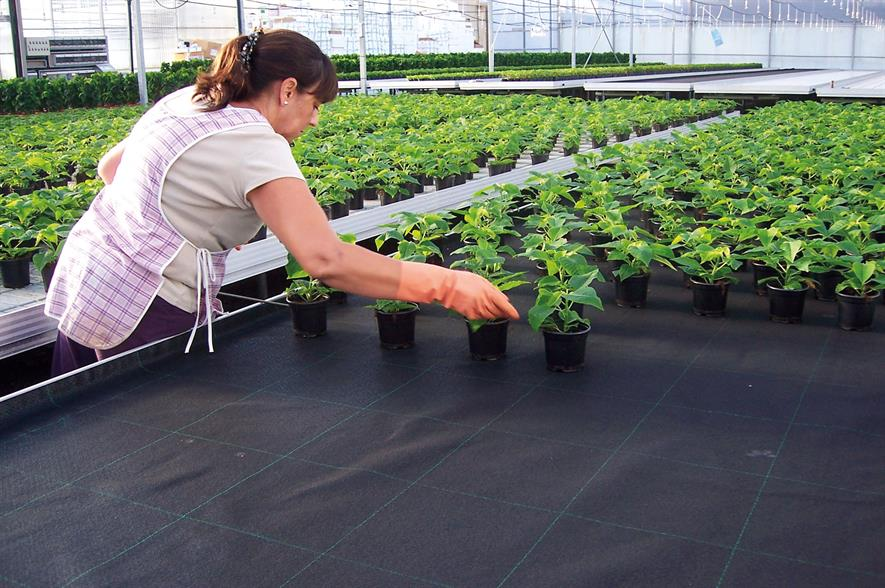 PG Horticulture supplies capillary matting from German firm Reimann