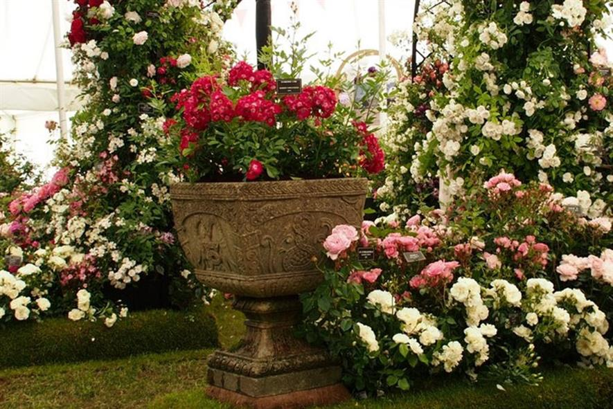 Peter Beales' RHS Hampton Court Flower Show 2016 award-winning exhibit