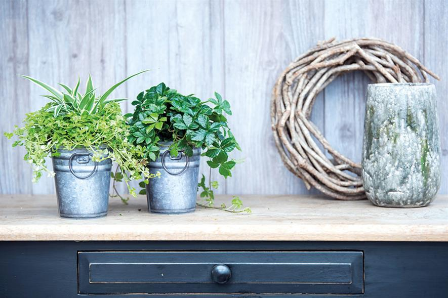 Pots and containers: latest market trends to emerge are colours and adding value - image: Pöpplemann