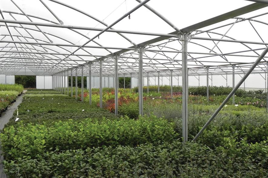 Rainbow Plants: polytunnels help to keep a wide range of plants in tip-top condition - image: HW