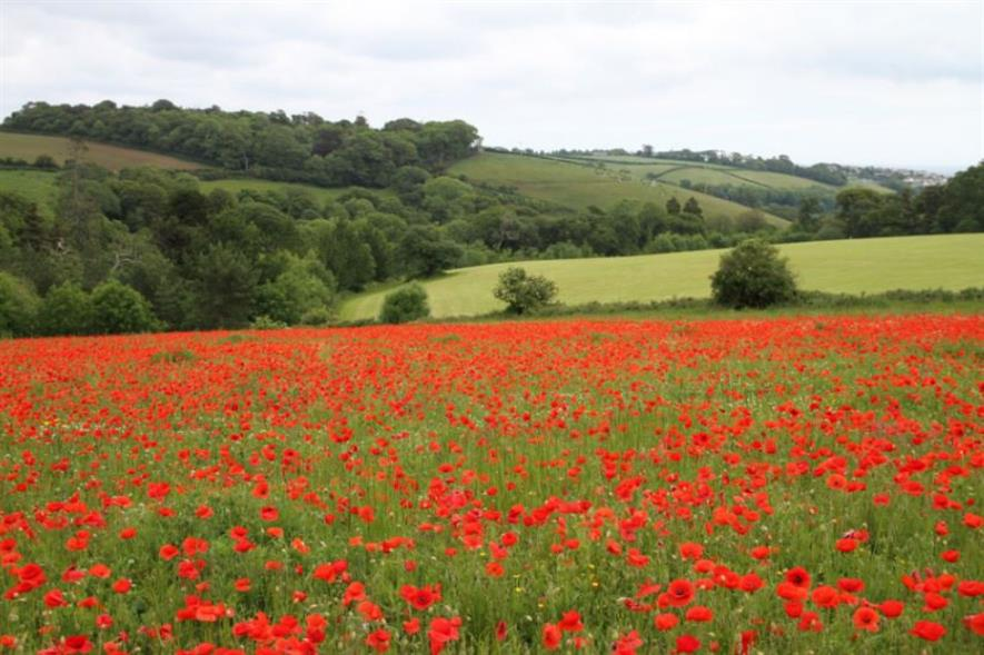 The poppy field at Heligan. Image: Supplied