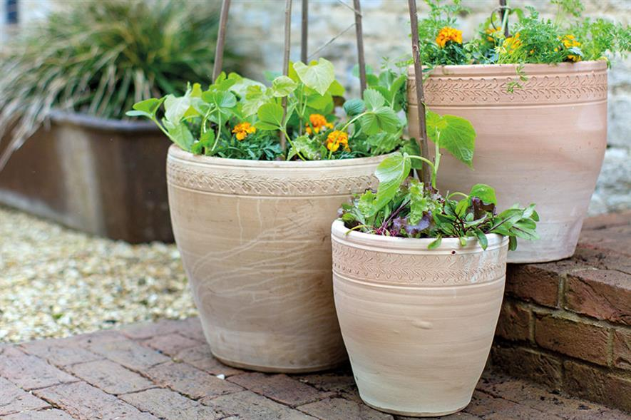 Potted edible plants - image: Wyevale Garden Centres