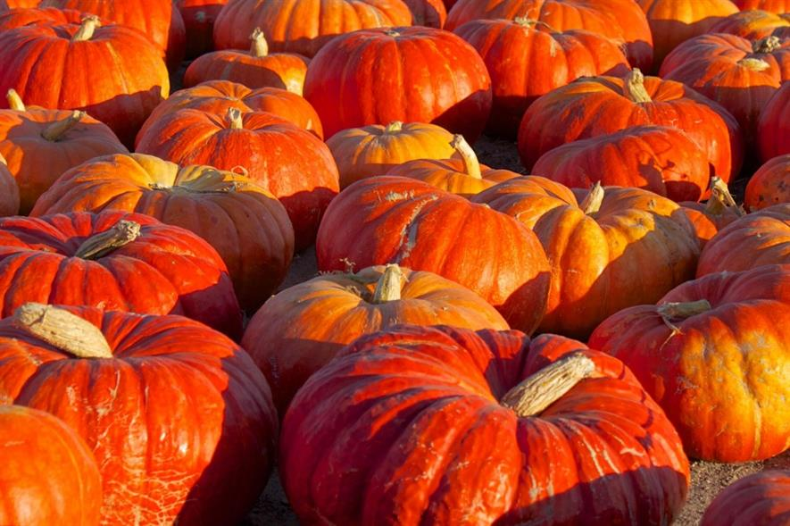 Pumpkins. Image: MorgueFile