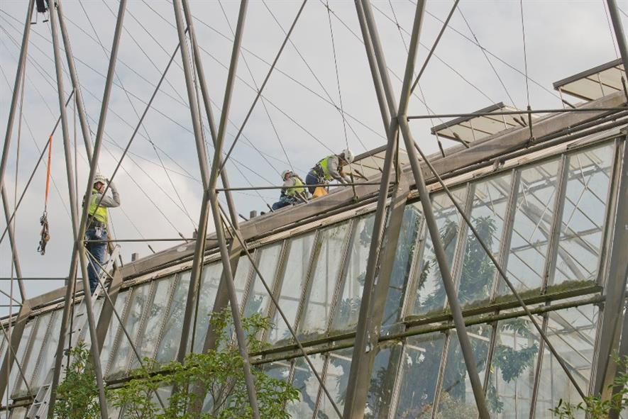 Specialist contractors SG Access at work on the glasshouses. Image: RBGE