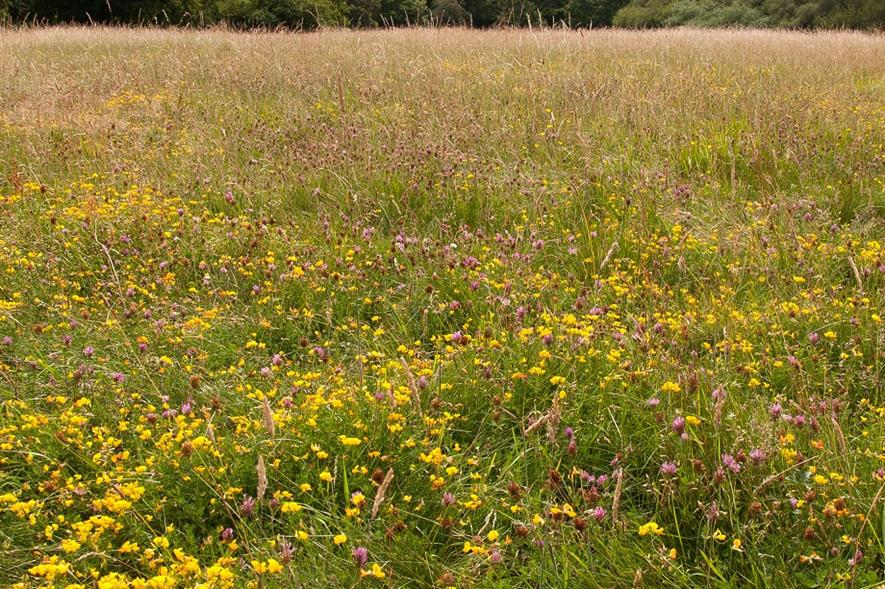 The site of the temporary mortuary will make way for a wildflower meadow - credit: City of London Corporation
