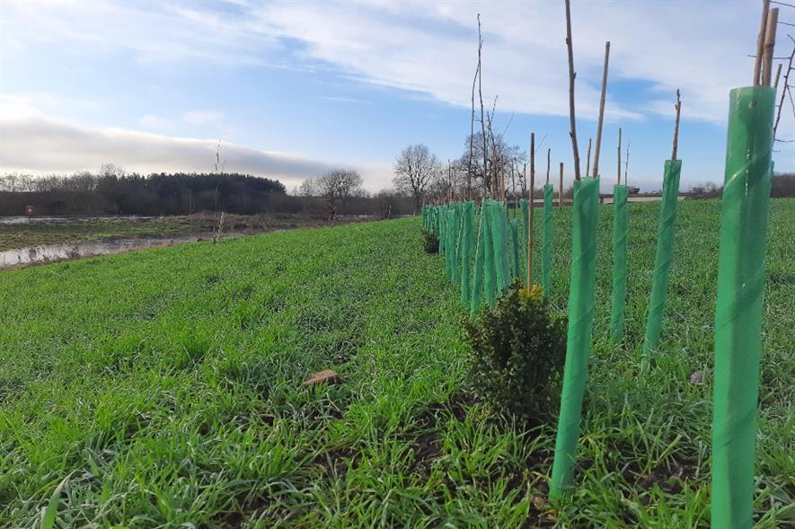 Tree planting at Monkmoor River Ground - credit: Shrewsbury Town Council