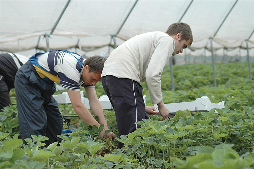 Seasonal labour: ongoing challenge for British growers facing tough season ahead - image: NFU
