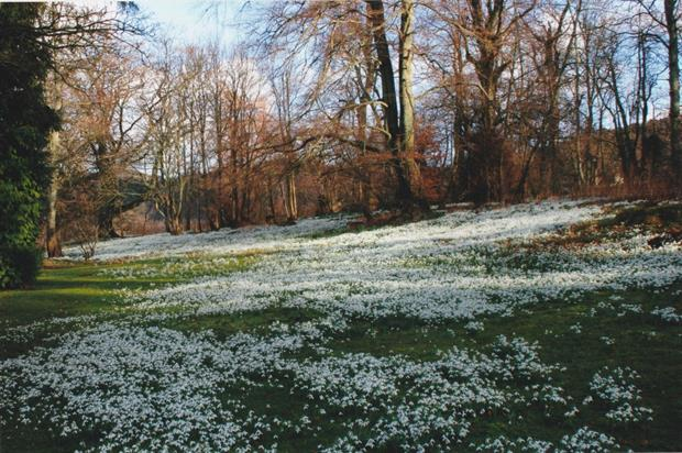 Kailzie Gardens in Peebles. Image: Discover Scottish Gardens
