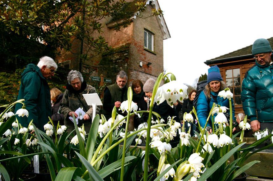 Snowdrop Sensation - all images: Great Comp Garden