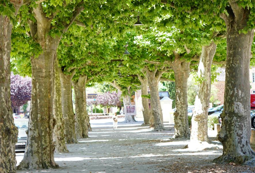 Street trees mitigate air pollution. Image: lauramusikanski/Mourgefile