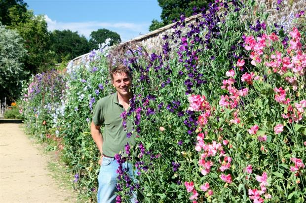 Tom Brown with his Sweet Pea trials in 2016. Image: Parham House and Gardens