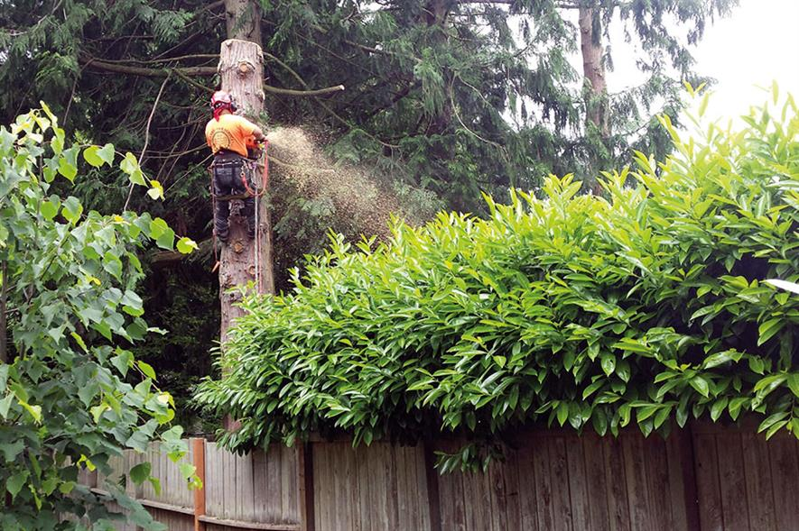 Diversity: the arboriculture industry is now reaching out to women as well as men - image: Wonderlane
